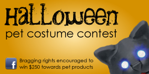 Pet Costume Contest
