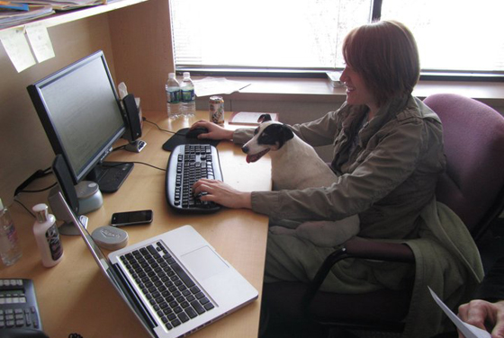 Minnie on Liz's lap, working hard!