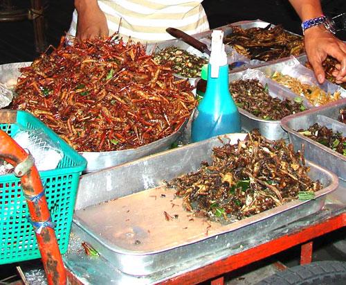 Thai grasshoppers