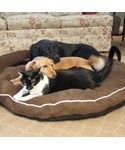 Bolster Dog Bed - Cocoa