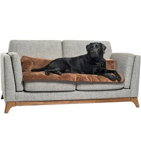 Dog Couch Protector Image