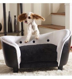 Memory Foam Dog Bed Image