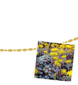 Photo Display - Magnetic Chain Image