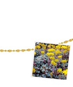 Photo Display - Magnetic Chain