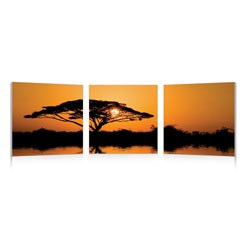 Photography Print Triptych - Savannah Sunset Image