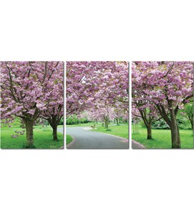 Mounted Photography Prints - Spring in Bloom Image
