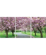 Mounted Photography Prints - Spring in Bloom