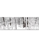 Photography Print Triptych - Winter Woods